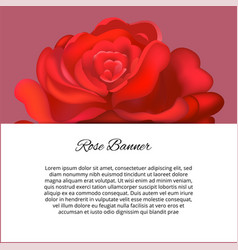 wedding card or invitation with abstract floral vector image