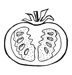 cutting tomato vector image