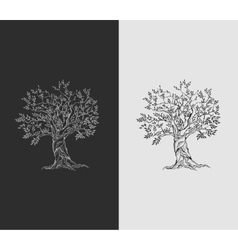 Olive tree on vintage paper vector image vector image