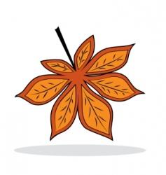 chestnut leaf vector image