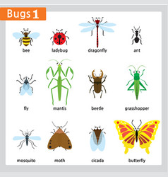 First bug series vector