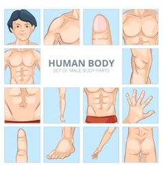 Male body parts in cartoon style icons set vector