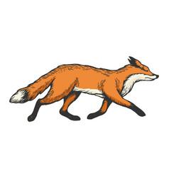 running fox animal color sketch engraving vector image