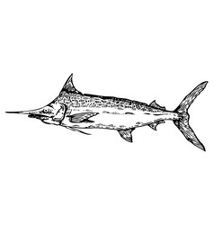 Swordfish engraving style vector