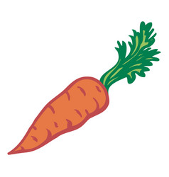 carrot isolated object image vector image