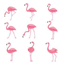 cartoon pink flamingo set cute flamingos vector image