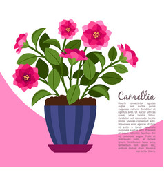 Camellia indoor plant in pot banner vector
