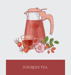 detailed drawing of glass jug with strainer cup vector image