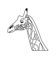 Giraffe head herbivore african wildlife vector