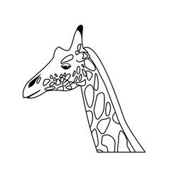 giraffe head herbivore african wildlife vector image