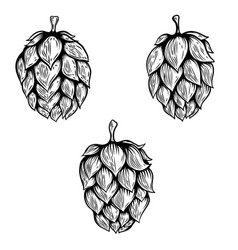 Set of hand drawn beer hop design element for vector