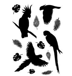 set parrot silhouette with palm leaves vector image