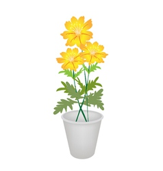 Three Cosmos Flowers in A Flower Pot vector