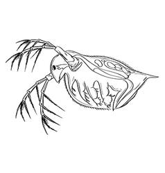 Daphnia vector image