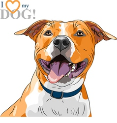 sketch smiling dog American Staffordshire Terrier vector image