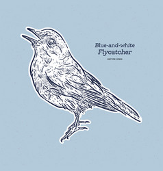 blue-and-white flycatcher cyanoptila vector image
