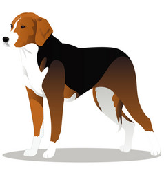 estonian hound cartoon dog vector image