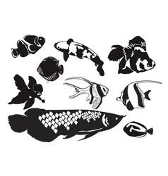Freshwater ornamental decorative fish black vector