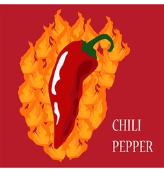 hotchili vector image