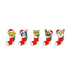 pets as a christmas present christmas mood vector image