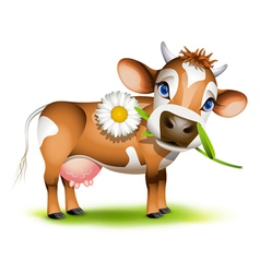 Little Jersey cow vector image vector image