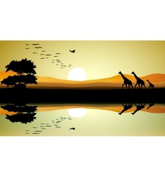 beauty safari of giraffe silhouette vector image