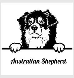 Australian shepherd - peeking dogs - breed face vector