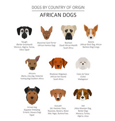 Dogs by country of origin african dog breeds vector