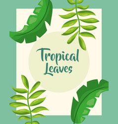 tropical leaves natural cover foliage design vector image