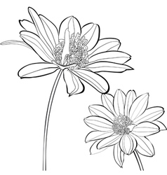 Template for card with Gerber flowers vector image vector image