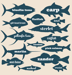 ocean fish silhouettes with names isolated vector image vector image