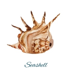 seashell watercolor painting on white background vector image vector image