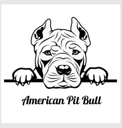 american pit bull - peeking dogs - breed face head vector image