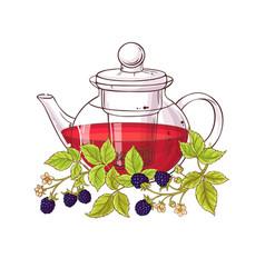 Blackberry tea vector