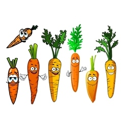Cartoon isolated orange carrot vegetables vector
