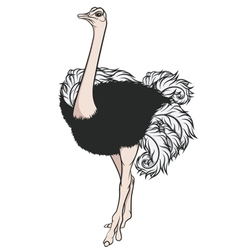 Color of an ostrich vector image