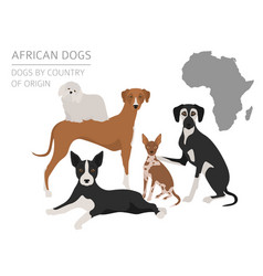 dogs by country of origin african dog breeds vector image