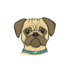 Head dog pug with the collar hand-painted vector