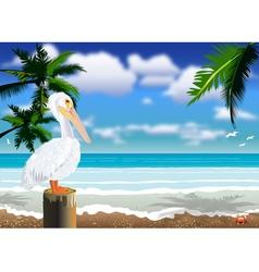 Pelican beach 2 vector image