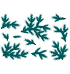 Realistic blue spruce branches set for decoration vector