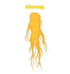 Ginseng panax root in cartoon style vector