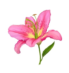 lily hand drawn painted vector image