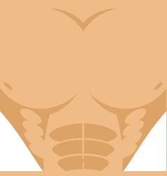 male torso athletic man chest abdomen strong vector image