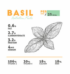 Nutrition facts raw basil vector