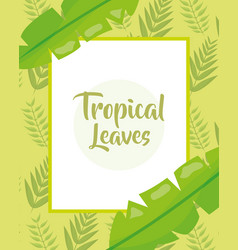 tropical leaves banner botanical jungle template vector image