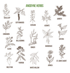 Anodyne herbs hand drawn set of medicinal plants vector