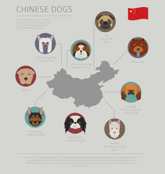 dogs by country of origin chinese dog breeds vector image