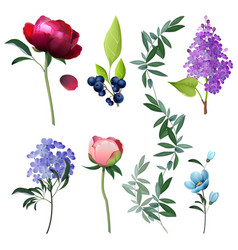flowers collection decorative botanical floral vector image