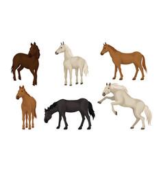 Horse breeds set beautiful horses different vector