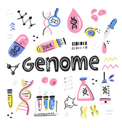 Human genome project vector